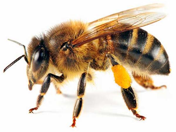 bee, bee farming, honey bee, beekeeping, apiculture