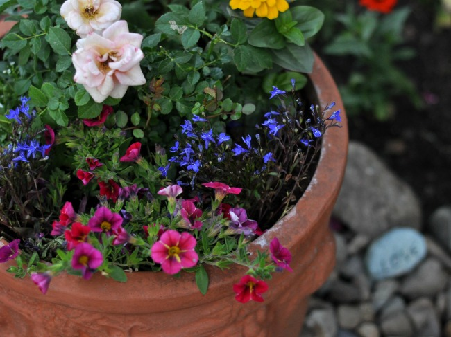pots filled with annuals