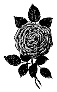 rose flower drawing illustration image artwork botanical