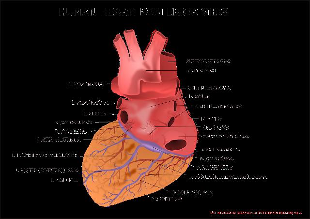 اكلات لمرضى القلب والكوليسترول