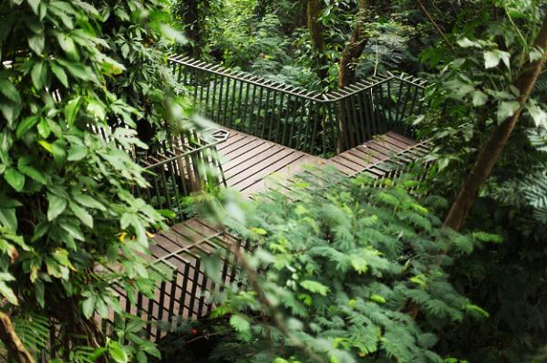 foto wisata forest walk babakan siliwangi bandung
