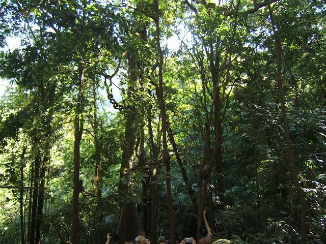 тропики на Гоа