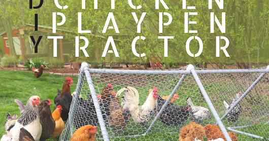 DIY Chicken Playpen Tractor featuring a Chicken Fountain GIVEAWAY!