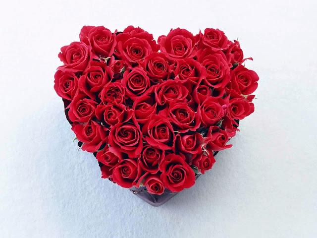 Khasiat dan Manfaat Mawar Untuk Kesehatan Yang Tidak Diduga 30 Khasiat dan Manfaat Mawar Untuk Kesehatan Yang Tidak Diduga