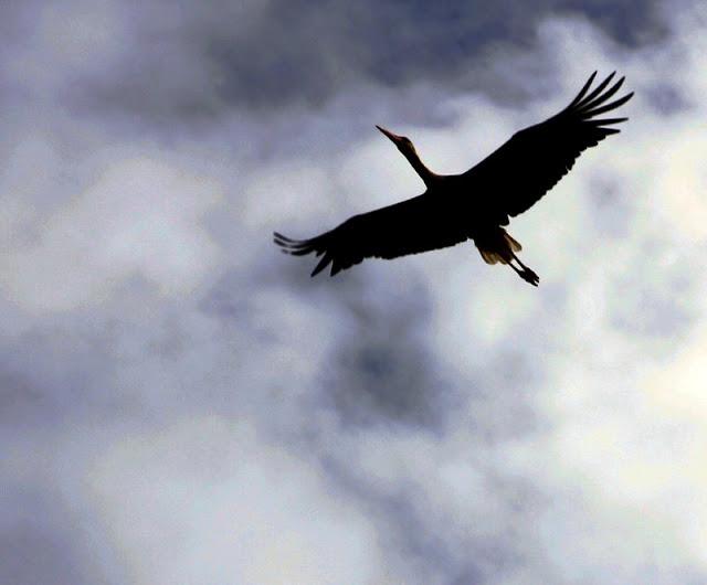 Phantastische Vögel aus aller Welt: Unterwegs im Weltvogelpark Walsrode. Die Flugshow u.a. mit Greifvögeln war phantastisch!