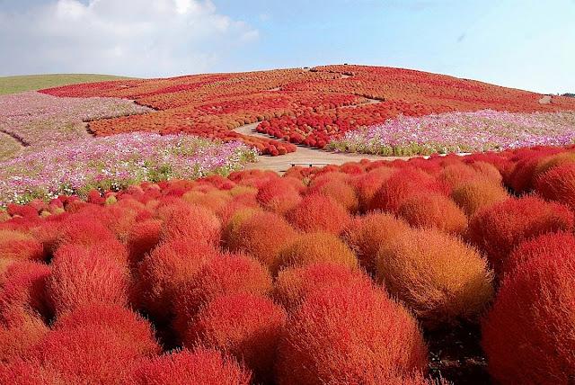 """حديقة """"هيتاشي سي سايد"""" - اليابان -"""