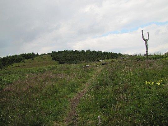 Ždiarske sedlo (1473 m n.p.m.) - widok w stronę stoku Andrejcovej.