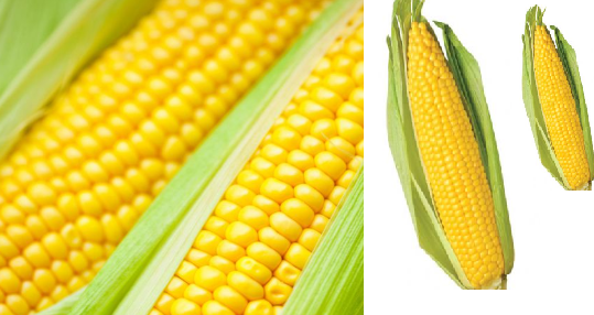 Corn meaning in hindi, Spanish, tamil, telugu, malayalam, urdu, kannada name, gujarati, in marathi, indian name, marathi, tamil, english, other names called as, translation