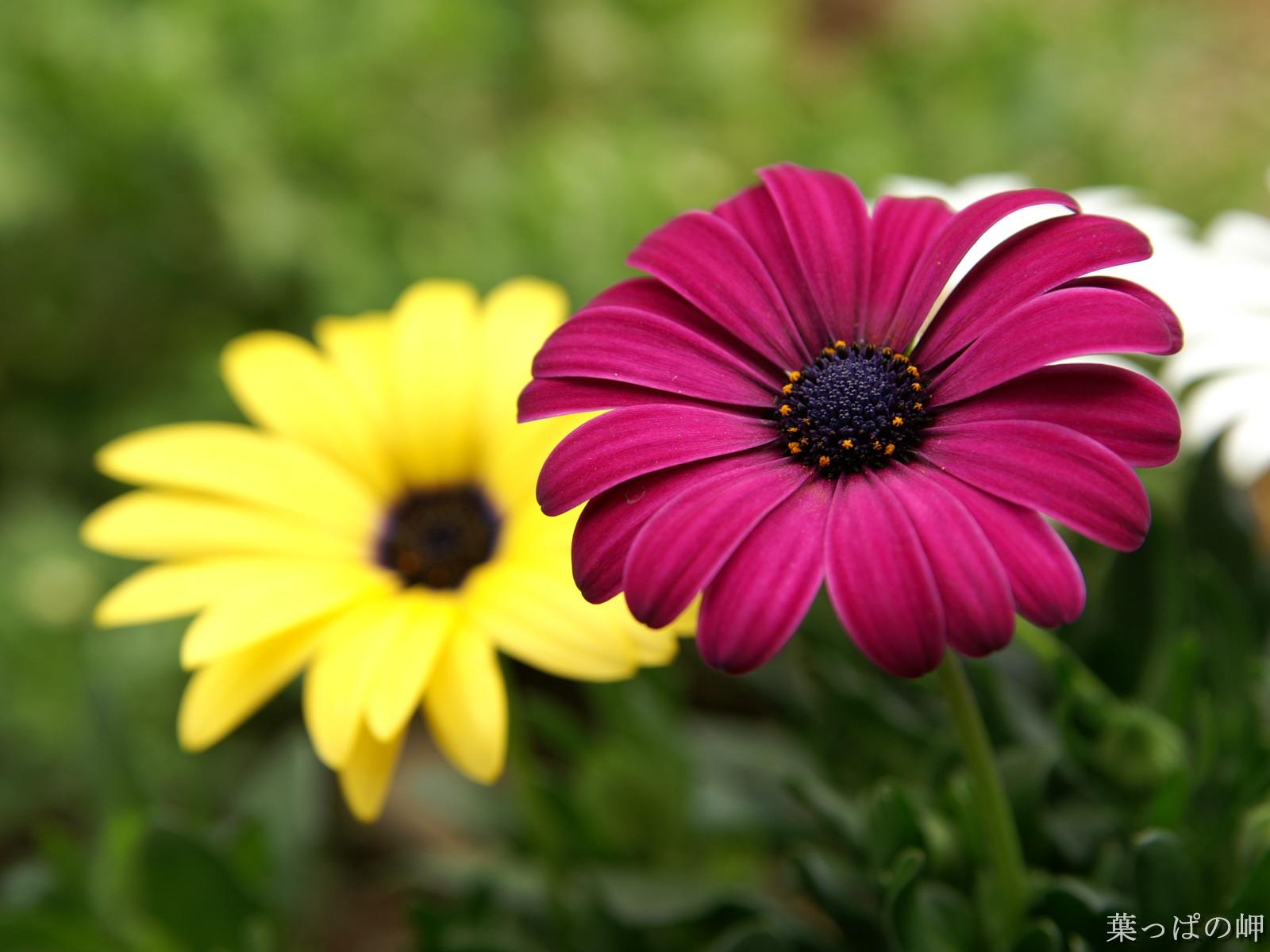 Beautiful Flowers HD Desktop Wallpapers in 1080p ~ Super ...