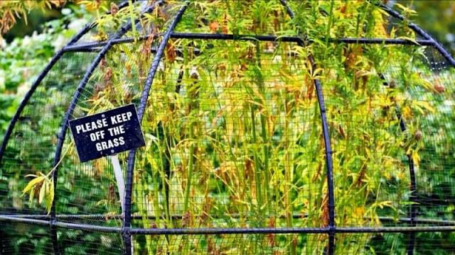 Traveling ke Alnwick Garden, Taman Berbahaya yang Penuh Tanaman Beracun