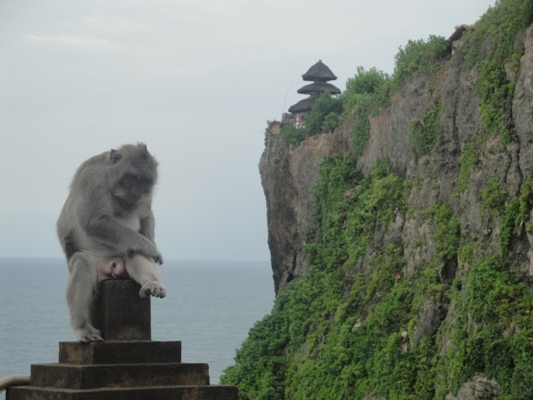 Tour Fees Uluwatu Bali Cliff Temple, Kecak Fire Dance & Monkey Forest - Uluwatu, GWK Statue, Bali, Price, Cost, Rates, Charges, Fee, Holidays, Tours, Sightseeing, Trips, Excursions, Journey, Recreations, Picnic, Jaunt, Leisure, Attractions