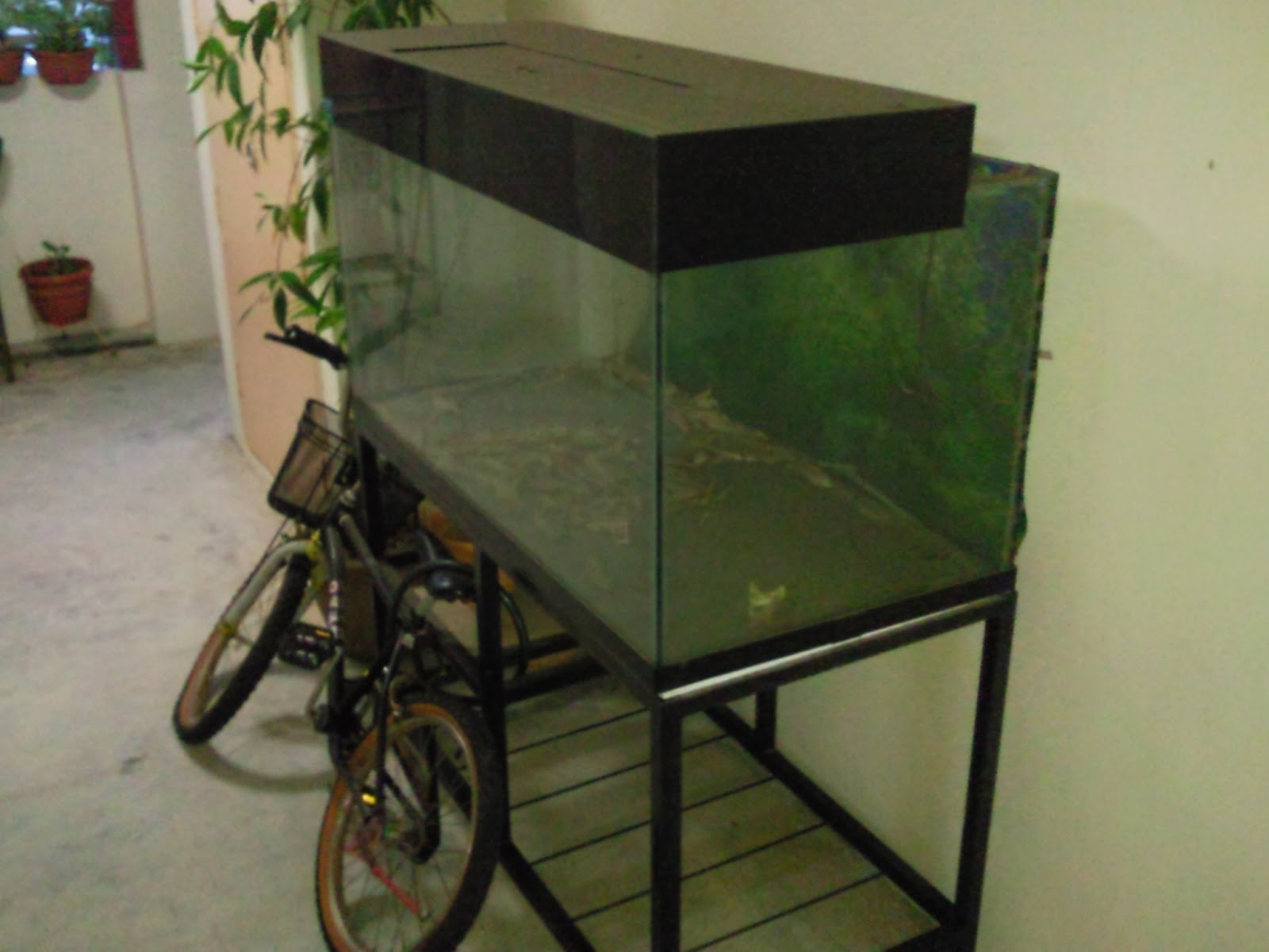 Singapore Big Sale: Many 2 to 4 feet Fish Tanks For Sale