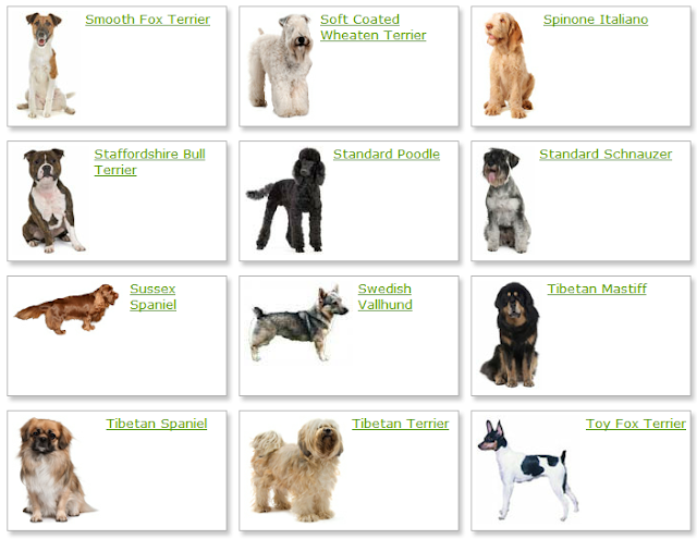 All List Of Different Dogs Breeds Dog Breeds List With