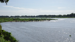 At the white Nile in Juba are also Hippos and crocodiles