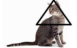 القط هو أكثر إثارة للاهتمام فى فكر الانسان