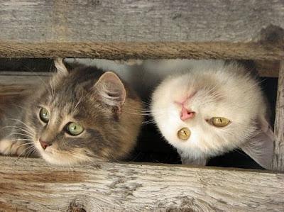 Cute Cats Kitty Pets 07