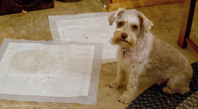 Dottie and OUT! Quilted Dog Potty Pads