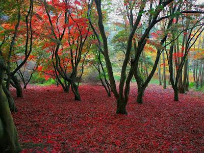 bosques, imágenes de bosques, el bosque