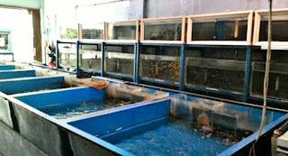Pasar Ikan Hias Jakarta Barat