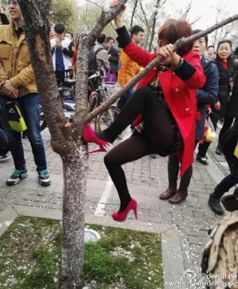 Perlakuan tidak bermoral di bawah pokok ceri