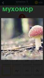 800 слов в лесу растет гриб мухомор 5 уровень