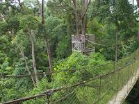 Bukit Bangkirai Kalimantan Timur, Wisata Alam dengan Pesona Hutan Alami Indonesia