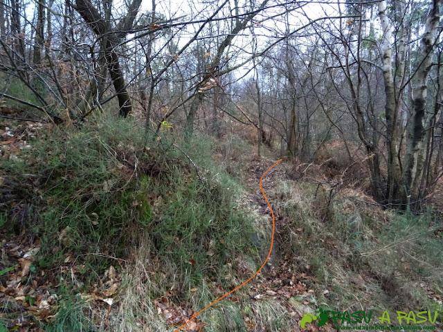 Alto la Corona o Pico La Ablanosa: Sendero en la zona alta del bosque