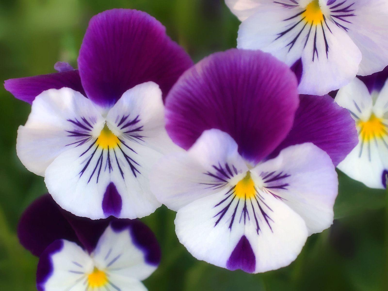 Romantic Flowers: Flowers