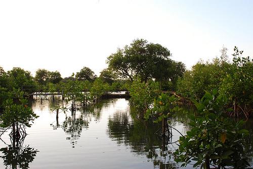 Wisata Alam Kapuk Angke Jakarta Utara Taman Wisata Alam Kapuk