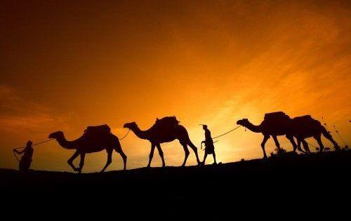 Караван камила, Пустиња