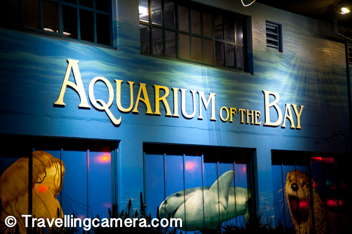 3. Aquarium of the Bay can be interesting place.     Personally I liked Monterey Aquarium over Aquarium of Bay, but it's a decent option if you are interested in exploring sea life and have time while roaming around Pier-39 and Fishermen Warf.