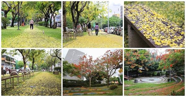 《台中.西區》梅川東路-雨後的阿勃勒在步道鋪上黃金地毯,還有文化中心鳳凰花開