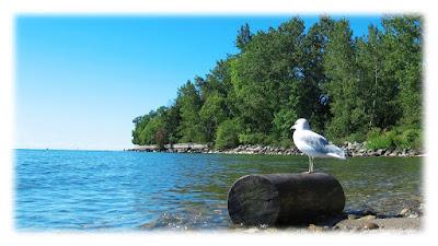 seagull-island-beach-toronto