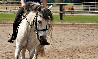 Grey horse with a black mane being ridden in a outdoor riding school