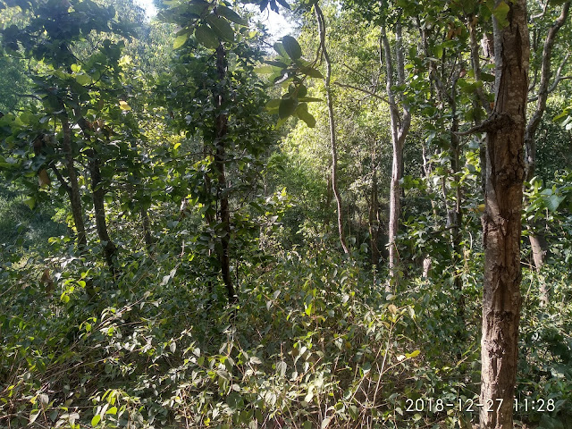 Dense Forest Area - Satpura Tiger Reserve Forest