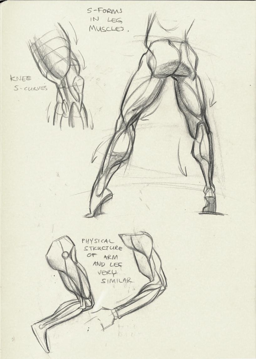 leg muscles drawing - photo #6