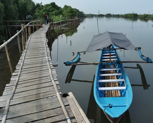 Tinuku Society built Jembatan Api-Api walkway in Congot Mangrove Forest for coastal rehabilitation closer to public