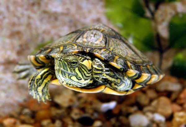 nomes para tartarugas