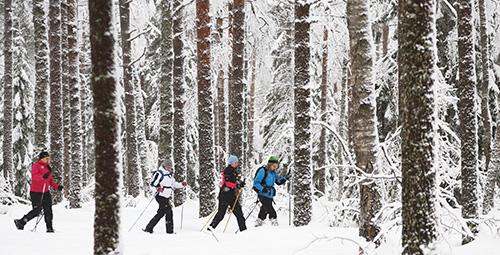 Lumikenkäretkellä talvisessa metsässä