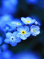 Forget Me Not Dementia