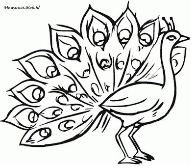 Mewarnai Gambar Burung Merak Mewarnai Gambar Besthanukkahgiftsco