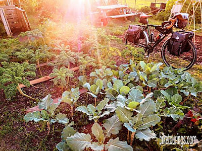 Picture of touring bike at local organic garden
