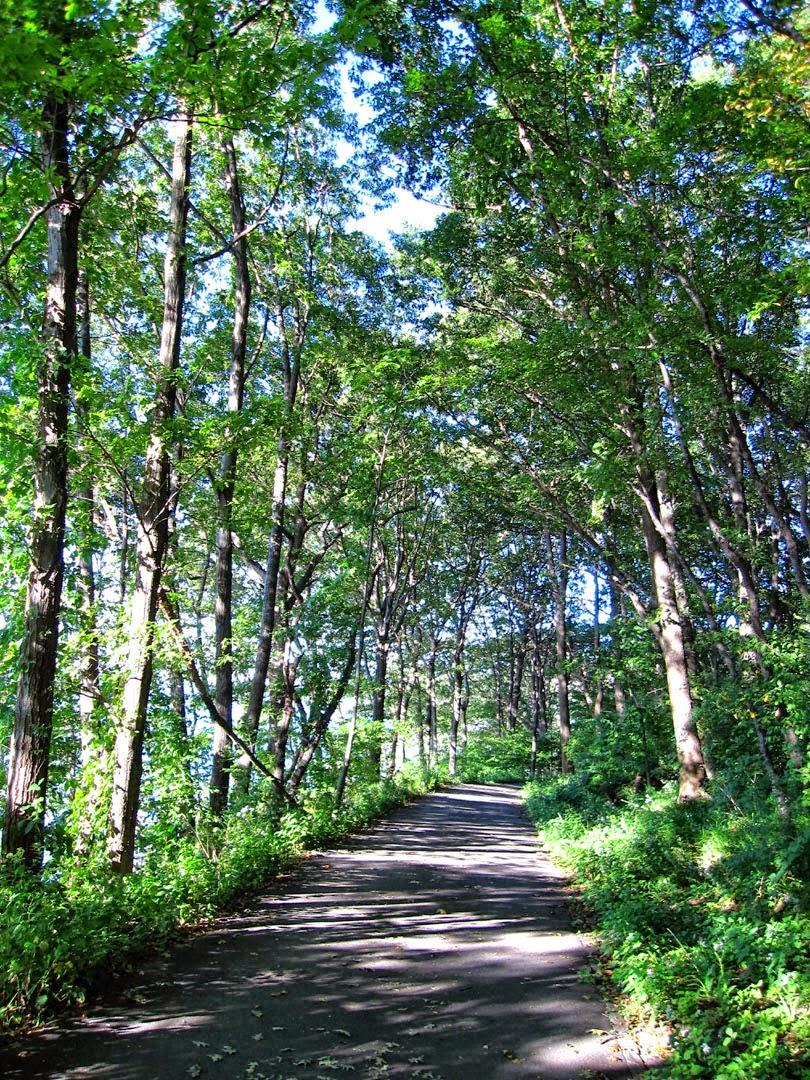 66 Square Feet Plus Wild Edibles Walk Inwood Hill Park