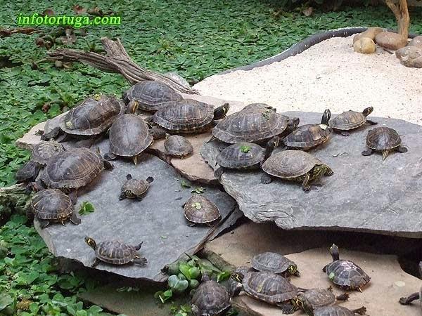 Tortugas en Atocha
