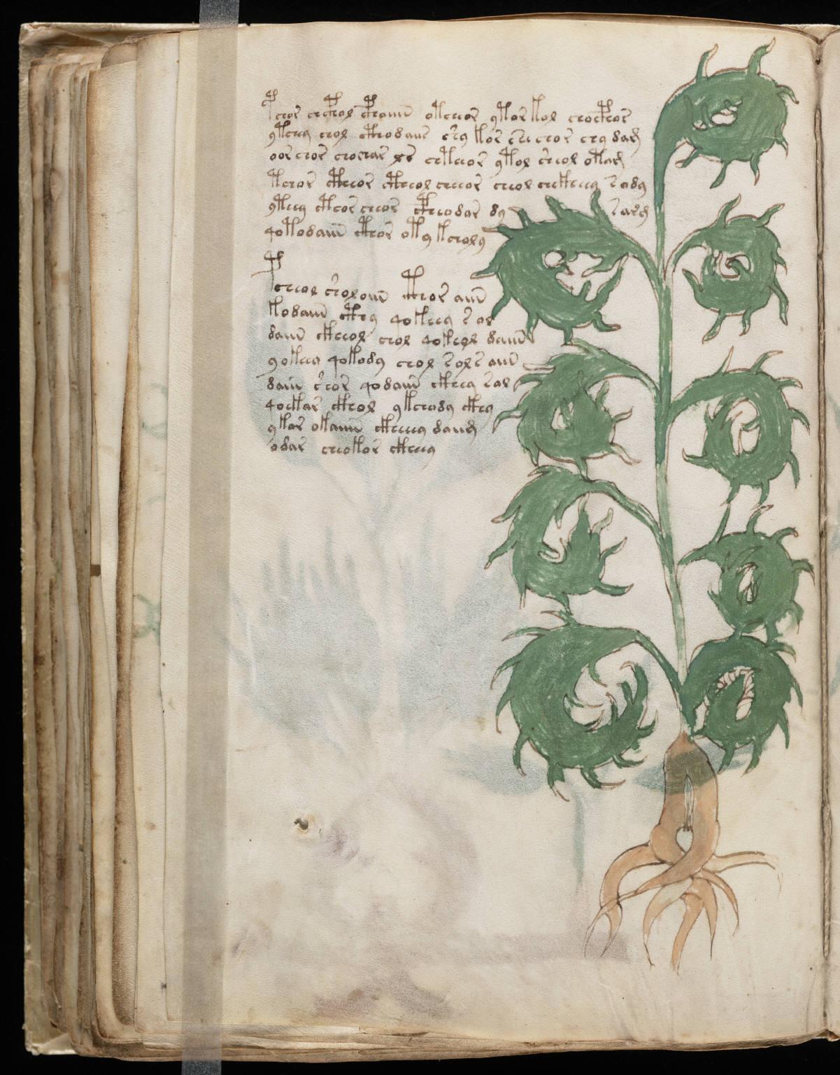 manuscrito102