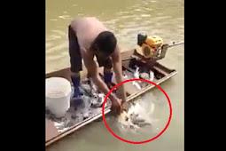 Mancing Pakai Kepala Hewan, Perahu Nelayan Ini Penuh Ikan