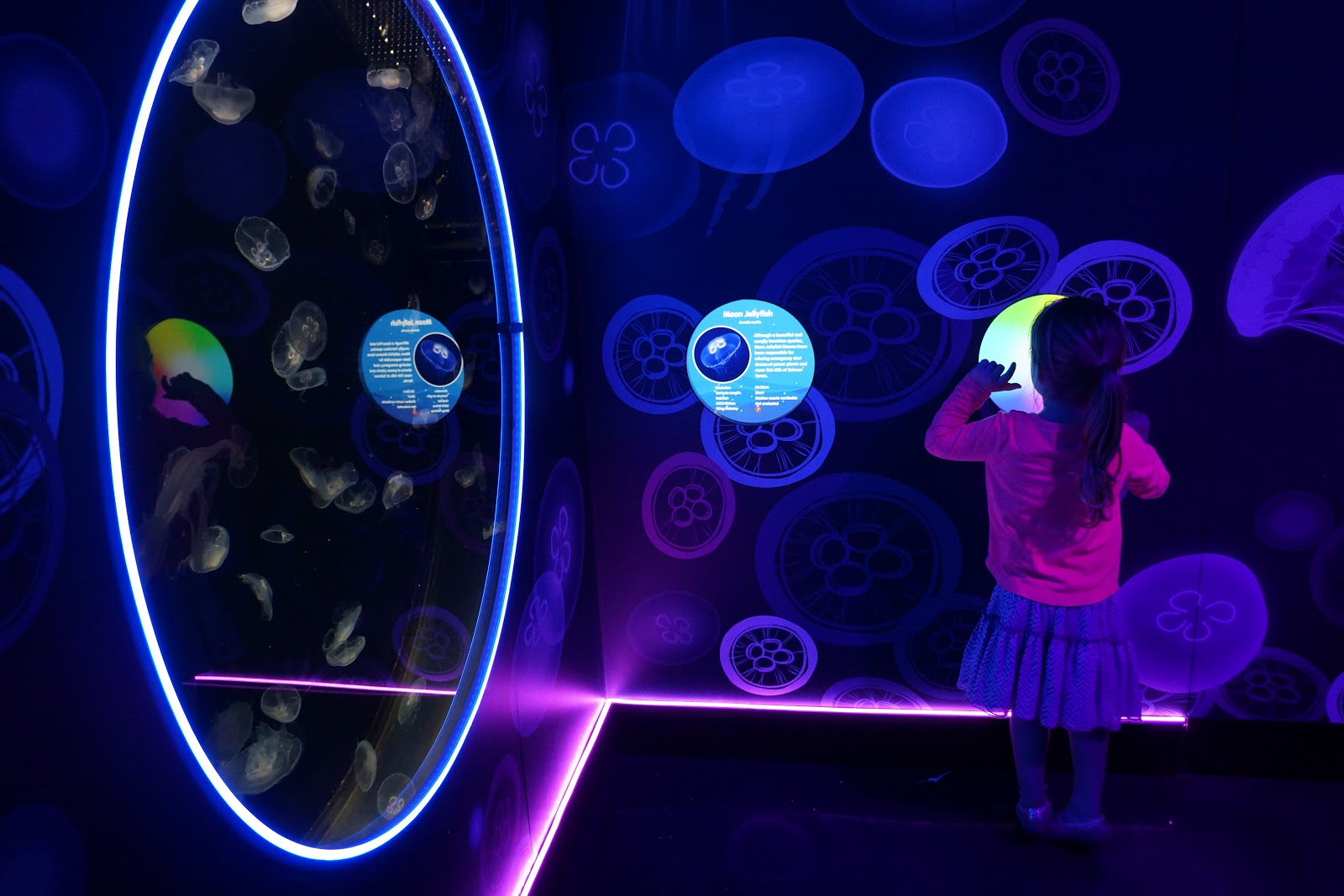 ocean invaders jellyfish exhibition changing lights