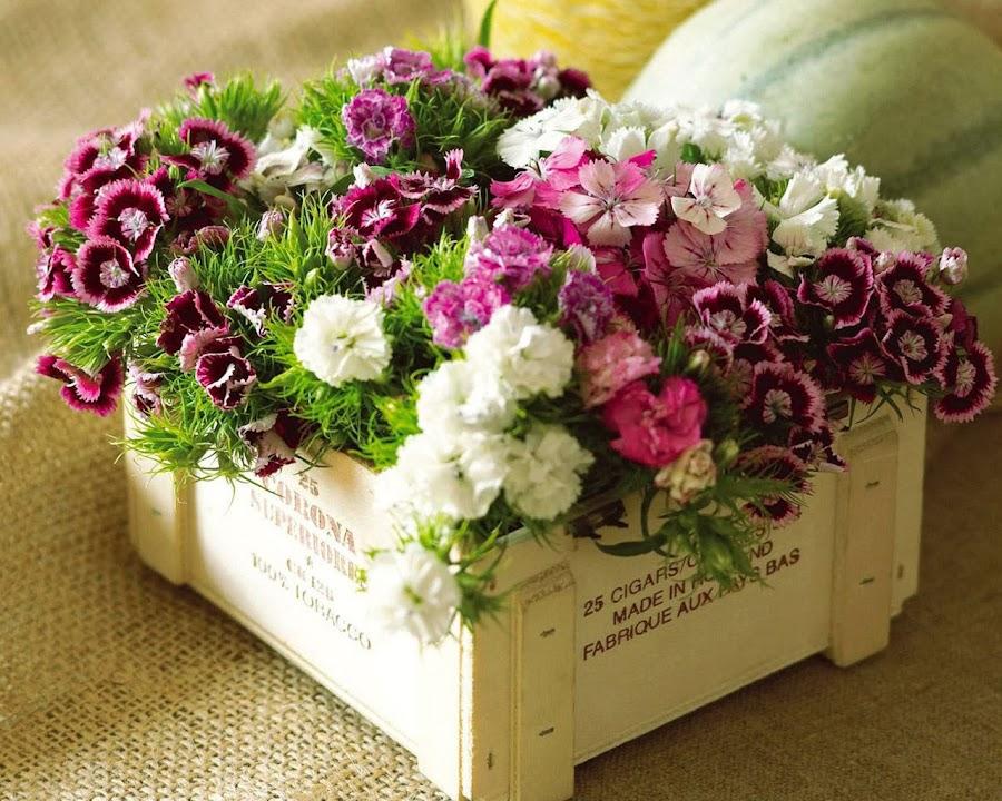 Consejos para mantener las flores