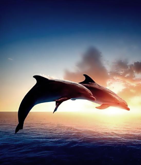 Vida Golfinhos Reflexao Poesia Amor