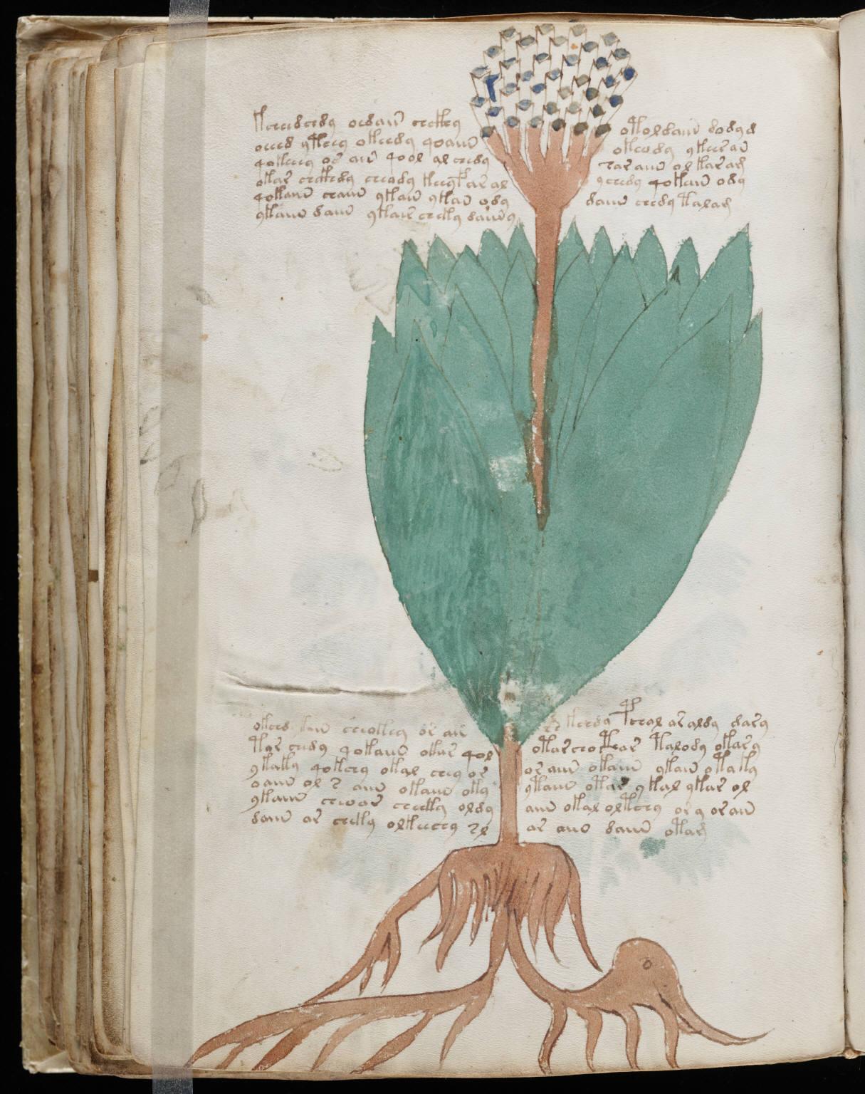 manuscrito108